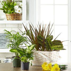Florist Designed