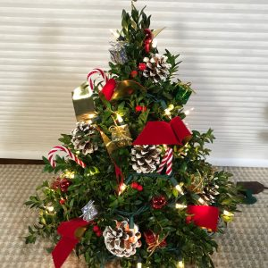 Boxwood Christmas Tree